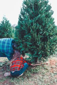 Should you get a real tree or a fake tree? Here are some pros and cons of each and the story of why we choose real every year! #livingletterhome #realchristmastree #christmastreefarm