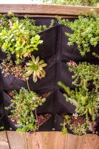 shoe pocket hanging garden